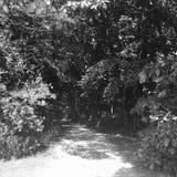 Bahn von Bäumen Stockfotografie