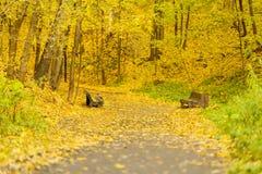 Bahn, Wegspur auf Stadtränden des Parks Alte Bänke, Herbsttag, viele gefallenes Laub Krähe, die auf Bank sitzt jahreszeiten Lizenzfreie Stockfotografie
