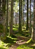 Bahn zwischen Bäumen stockfoto