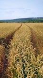 Bahnen auf einem Gebiet des Weizens Stockbilder