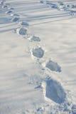 Bahnen auf frischem Schnee Lizenzfreies Stockfoto