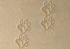 Bahnen der Katze im Sand Lizenzfreies Stockfoto