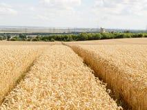 Bahnen durch den Weizen Stockfotografie