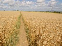 Bahnen im Weizen Lizenzfreies Stockbild