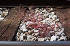 Bahngleis mit alten hölzernen Planken und rotes Gras zwischen ihnen Lizenzfreie Stockfotos