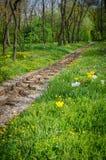 Bahngleise und Blumen Stockfoto
