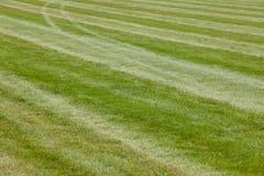 Bahnlinie des grünen Grases des Hippodroms Neues natürliches Feld Stockfotografie