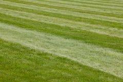Bahnlinie des grünen Grases des Hippodroms Neues natürliches Feld Stockfoto