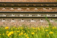 Bahnschienen und Lagerschwellen liegen aus den Grund vor dem hintergrund des gelben blühenden Löwenzahns stockfoto