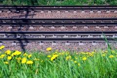 Bahnschienen und Lagerschwellen liegen aus den Grund vor dem hintergrund des gelben bl?henden L?wenzahns lizenzfreie stockbilder