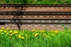 Bahnschienen und Lagerschwellen liegen aus den Grund vor dem hintergrund des gelben bl?henden L?wenzahns lizenzfreie stockfotografie