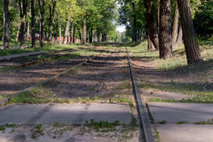 Bahnstreckewicklung durch Wald Lizenzfreie Stockbilder