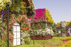 Bahouses of flowers in the park Dubai Miracle Garden. Background landscape view of a street with houses made of greenery and flowers in the park Dubai Miracle stock images