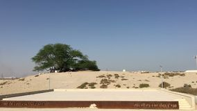 Bahrein, Manama 25,03,2018 Atracción turística en Bahrein: Árbol de la vida almacen de metraje de vídeo
