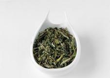 Bai mu dan premium chinese white tea Stock Photography