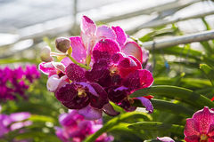 Bai Orchid and Butterfly Farm at Chiang Mai, Thailand Stock Photography