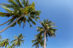 Bai Sao Beach Phu Quoc ö, Vietnam Arkivfoton