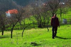 baia母马漫步的罗马尼亚 库存图片