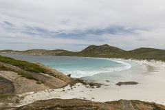 Baia Beach Cape le Grand del cardo selvatico Fotografia Stock Libera da Diritti