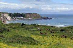 Baia bianca del parco - Ballycastle - Irlanda del Nord Immagine Stock Libera da Diritti