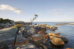 Baia dei fuochi, Australia Tasmania Immagine Stock Libera da Diritti