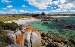 Baia dei fuochi, Tasmania immagine stock