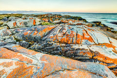Baia dei fuochi Tasmania Fotografia Stock Libera da Diritti