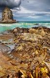 Baia del cannibale, Nuova Zelanda Fotografia Stock Libera da Diritti