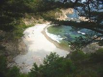 Baia del mare del pino Fotografie Stock Libere da Diritti