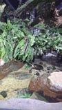 Baia della tartaruga Fotografia Stock