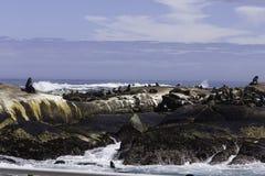 Baia di Hout dell'isola della guarnizione Immagine Stock Libera da Diritti