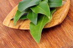 Baia Laurel Leaves Fotografie Stock