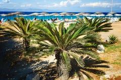 Baia vaga con la spiaggia come palma e del fondo nella priorità alta Fotografia Stock Libera da Diritti