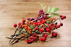 Baie, automne, bois, couleurs Image libre de droits