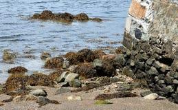Baie, bord de la mer, roches, algues et partie de vieux mur à Newport images libres de droits
