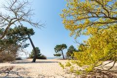Baie d'Arcachon, France Access à la plage dans Ares, près d'Andernos photographie stock