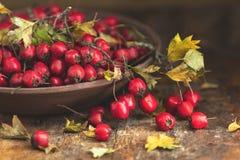 Baie d'aubépine de récolte d'automne avec des feuilles dans la cuvette sur un en bois merci image libre de droits