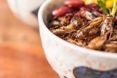 Baie d'insecte et de riz image stock