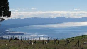 Baie d'or, Nouvelle-Zélande Photographie stock