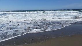 Baie de Bodega Photos libres de droits