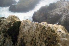 Baie de Bodega Photographie stock libre de droits