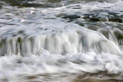 Baie de figuier Photographie stock libre de droits