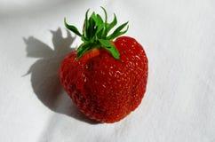 Baie de fraise sur un plan rapproché blanc de fond images stock