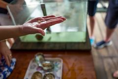 Baie de Halong, Vietnam - 27 avril 2018 : Le guide local explique le processus d'élevage de perle dans la ferme de perle de baie  Image stock
