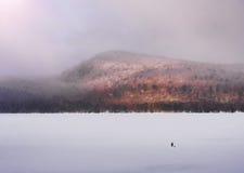Baie de Higgins Image stock