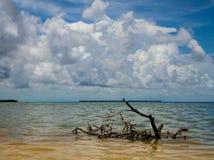 Baie de la Floride Photos libres de droits