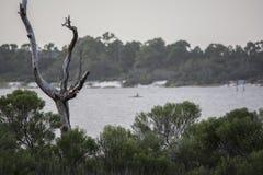 Baie de la Floride Photo libre de droits