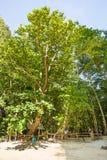 Baie de Maya d'inscription dans la jungle, île de Phi Phi, Thaïlande Photographie stock libre de droits