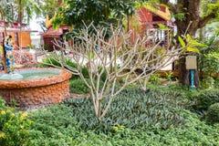Baie de Maya dans la jungle, île de Phi Phi, Thaïlande Image libre de droits