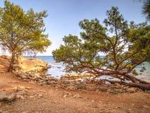 Baie de Phaselis de pins - amyuva, Kemer, côte et plages de ‡ de à de la Turquie Photos libres de droits